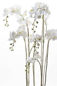Bilde av Kunstig Majestetisk Orkide i Mose 145cm