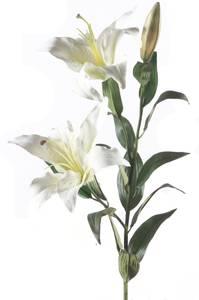 Bilde av Kunstig Liljegren Hvit 95cm