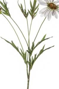 Bilde av Kunstig Prestekrage Hvit 80cm