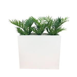 Bilde av Komplett Plantekasse - 3 stk Palmeplanter