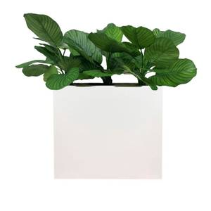 Bilde av Komplett Plantekasse - 3 stk Calathea Faciata Planter