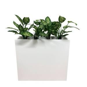Bilde av Komplett Plantekasse - 3 stk Diffenbachia Planter