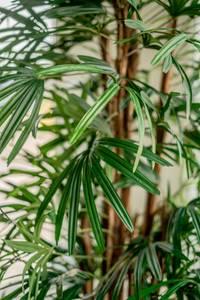 Bilde av Kunstig Lady Palme 210cm